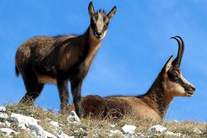 Discover the wild side of Abruzzo National Park Italy Explore Parco Nazionale d'Abruzzo